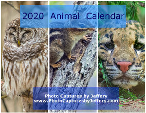 2018 Wildlife Wall Calendar