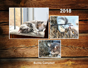Buddy Campbell the cat July 2017- June 2018
