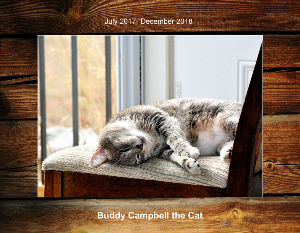 Buddy Campbell the cat July 2017- December 2018
