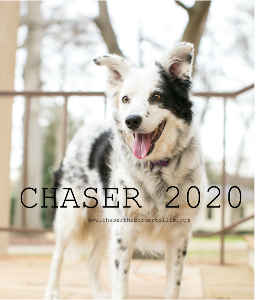 Chaser 2020 fundraiser for Hub City Animal Project