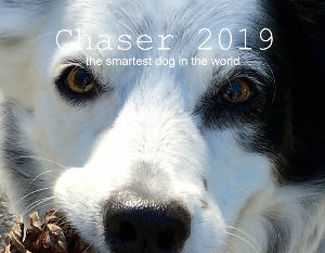 Chaser, the smartest dog in the world