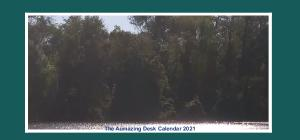The Aumazing Desk Calendar 2021