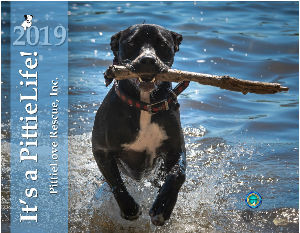 It's a PittieLife! Rescue Calendar 2019