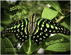 2020 Butterfly Brilliance