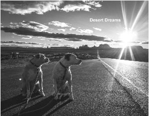 2018 Desert Dreams Wall Calendar