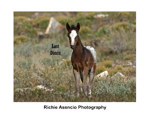 Wild in Nevada, Mares and Foals