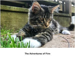 The Adventures of Finn 12 month calendar
