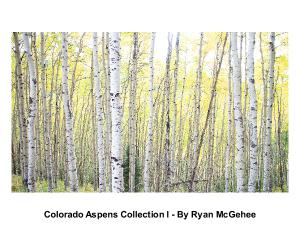 Colorado Aspen Collection 1 - Ryan McGehee