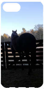 Horse Looking Outside
