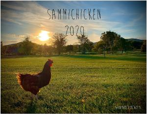 Sammi Chicken 2020 Calendar