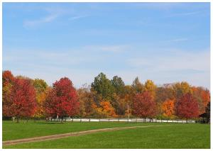 Colorful AutumnTrees