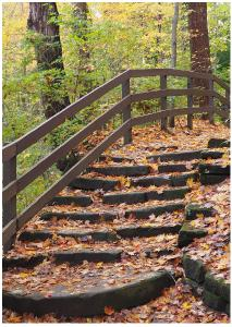 Fall Forest Stairs