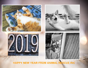 Animal Rescue Inc 2019 Calendar