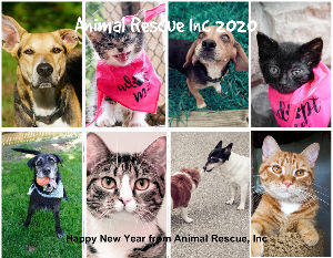 2020 Animal Rescue, Inc Calendar