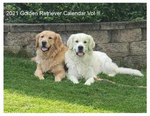 2021 Golden Retriever Calendar Vol II