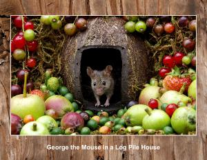 2021 George the mouse new images