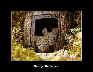 George The Mouse in a log pile house 2021 calendar