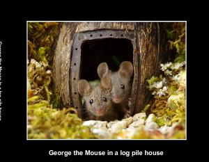 The Story of George the Mouse in a log pile house