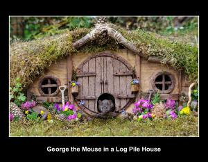 George the mouse in a log pile house 2020 calendar