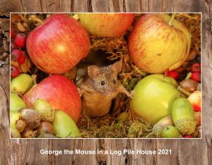 2020 George the mouse calendar