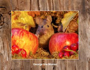George the Mouse in a wood pile house