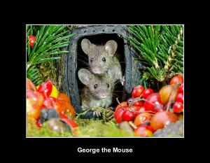 George the mouse in a log pile house