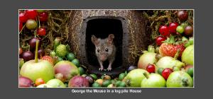 George the mouse desk calendar