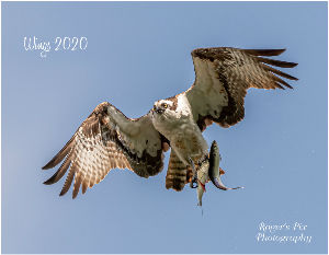 "Roger's Pix Photography ""Wings 2020"" Calendar"