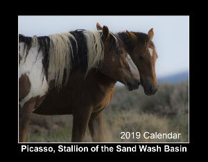 Picasso, Wild Mustang of Sand Wash Basin