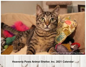 Heavenly Paws Animal Shelter, Inc. 2021 Calendar