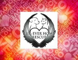 Fur-Ever Home Rescue 2019 Calendar