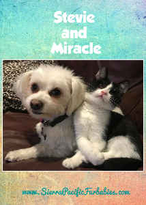 SPFs Miracle and Stevie Greeting Card