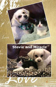 SPFs Stevie and Miracle Notebook