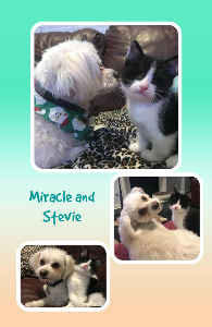 SPFs Stevie and Miracle Notebook 2