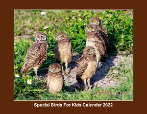Special Birds For Kids Calendar 2019