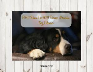 2021 Bernese Mountain Dog Calendar