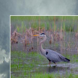 The Heron and the Hound Photography 2021