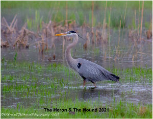 The Heron and The Hound 2021