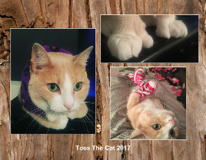 Toes The Cat 2017