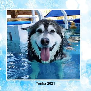 Tonka The Malamute