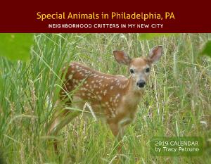 Neighborhood Critters in Philadelphia