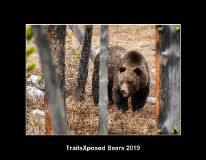Trailsxposed Bears 2019