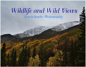 Wildlife and Wild Views 2019
