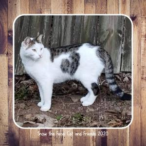 Snow the Feral Cat and Friends Calendar