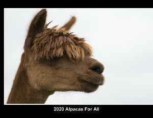 2020 -21 Alpacas For All