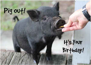 Pig Out! It's Your Birthday!