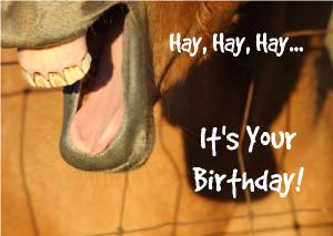 Hay, Hay, Hay... It's Your Birthday!