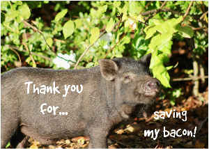 Thank You for Saving My Bacon!