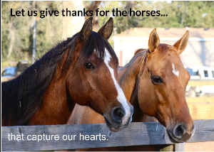 Give thanks to the horses that capture our hearts.