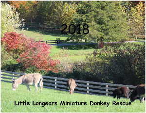 2018 Little Longears Calendar